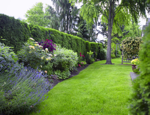 Splendid Landscape Portfolio